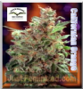 Dutch Passion Californian Orange Fem 5 Seeds